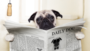 dog-newspaper-1col.png
